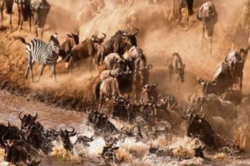 3 Days Maasai Mara Wildebeest Migration Package