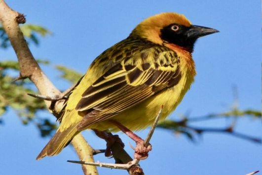 7 Days Bird Watching Kenya Safaris