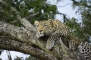 8 Days Best Couple Wildlife Safari Holiday