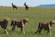 8 Days Kenya Safari & Beach Holiday