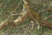 8 Days Kenya Wildlife Road Adventure Tour