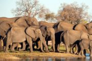 9 Days Special Big 5 Safari Experience