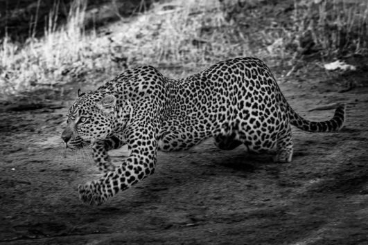Africa Photographic Safari Adventure