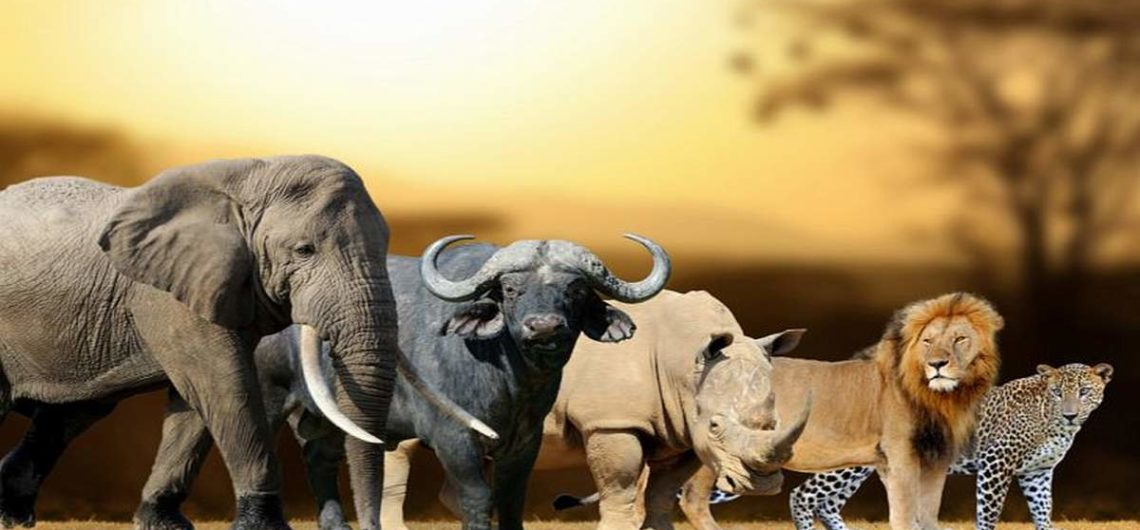 Big Five Africa Safari Tour Adventure