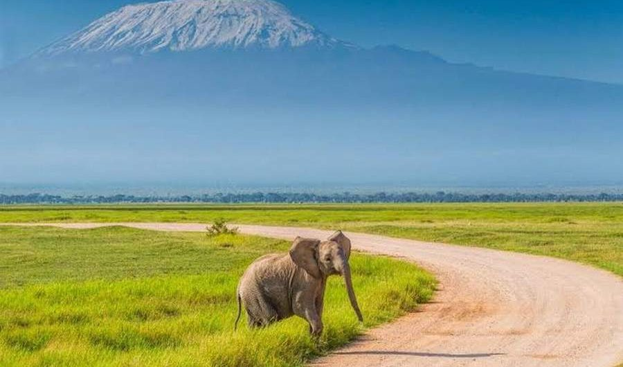 amboseli safari tour holiday package