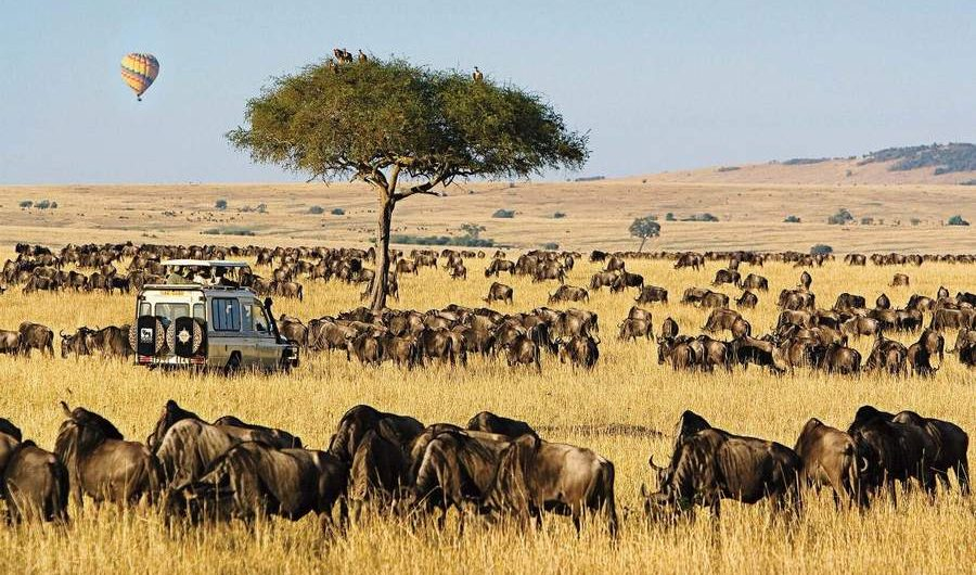 Masai Mara Wildebeest Migration Tour 2021