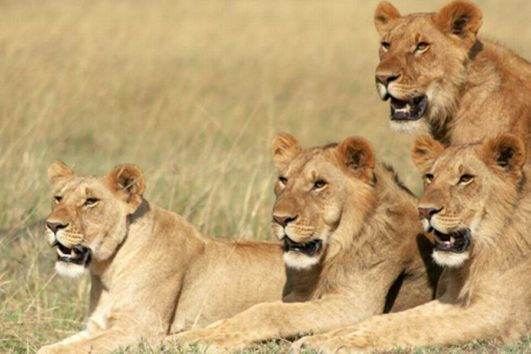 7 Days Kenya Tanzania Game Viewing Adventure