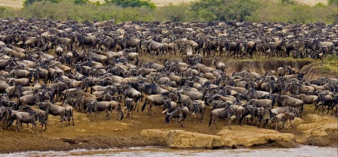 africa wildebeest migration